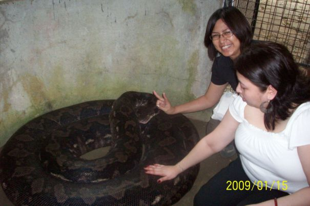 With Prony, one of the biggest pythons in captivity